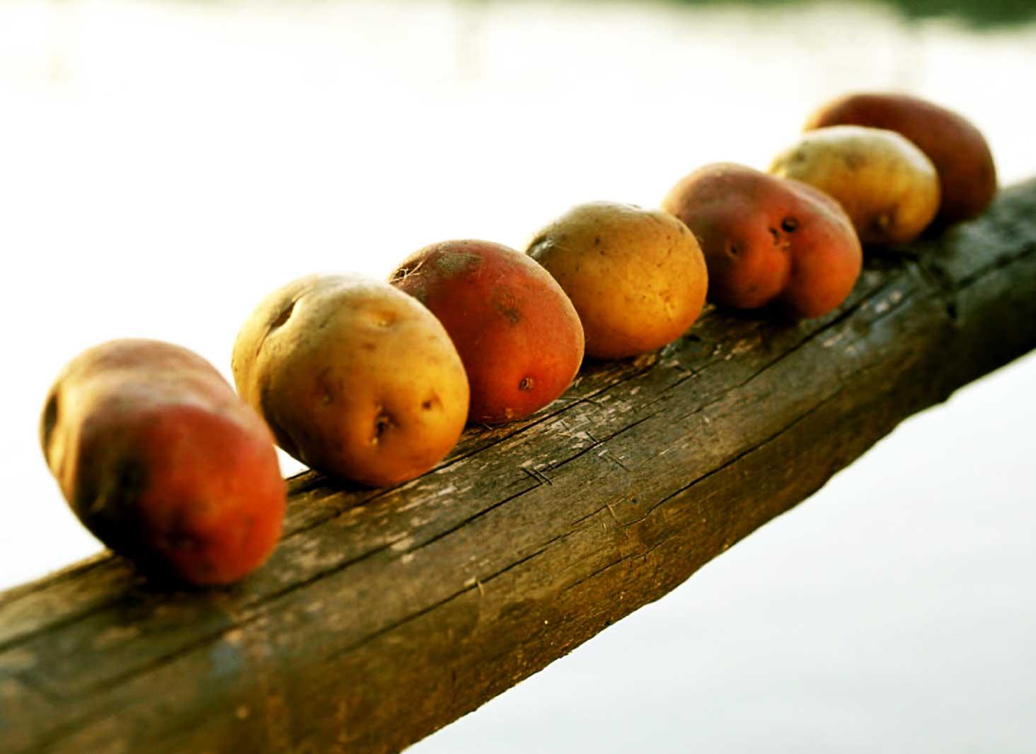 patate5